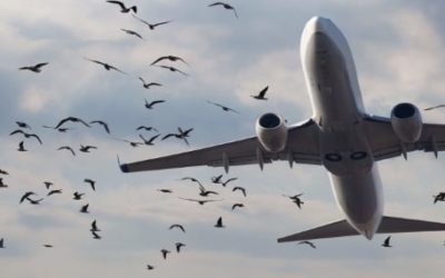 Bird Strike: More Collisions in Time of COVID-19